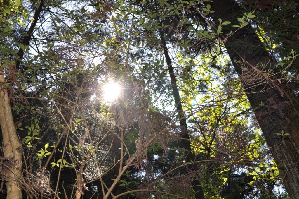 高尾山国有林