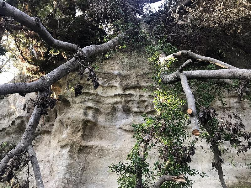 お猿畠の大切岸の台風被害