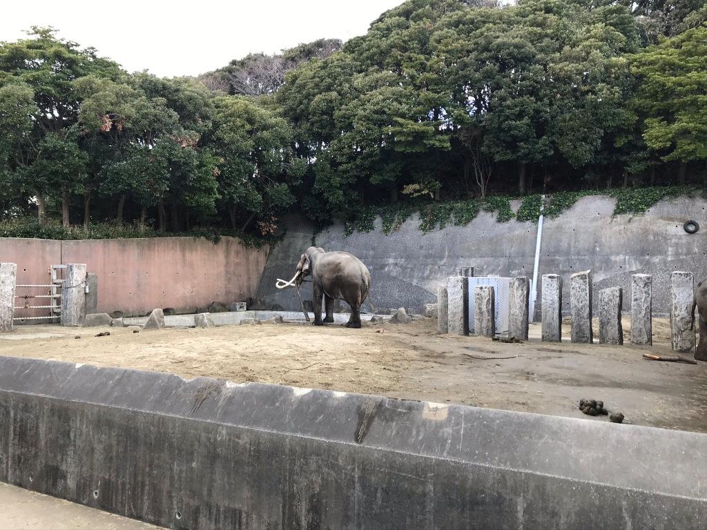 金沢自然動物公園ゾウ