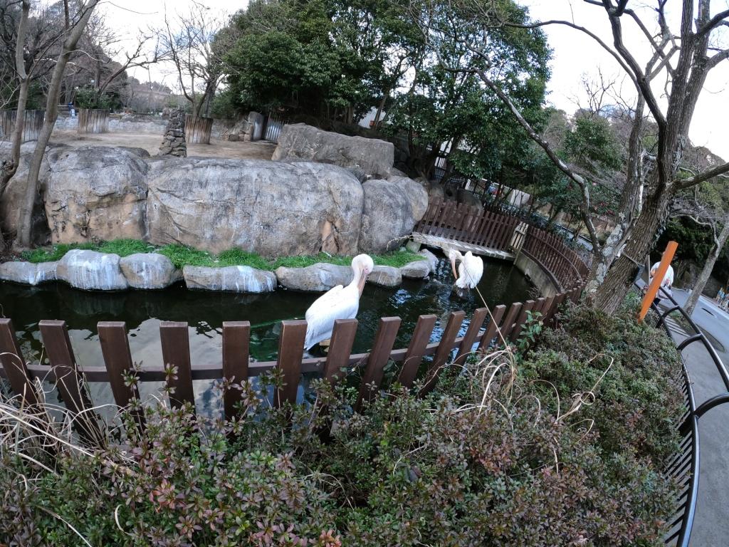 金沢自然動物公園白鳥